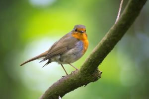 Celebrate World Migratory Bird Day at our Spring Open House